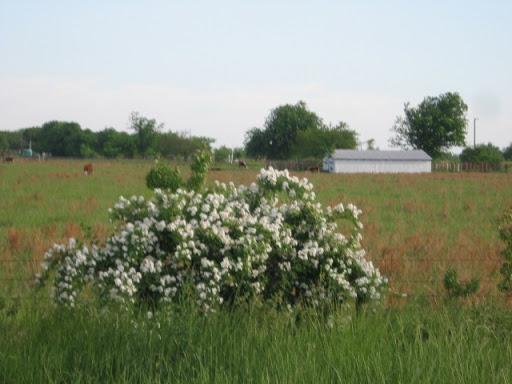 Taming the Wild Prairie