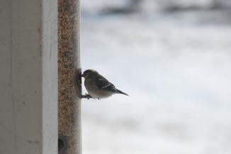 b2d13-bird004