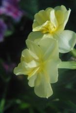 1a0a0-flowersmarch292012020