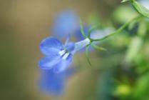 40365-flowersonporch003