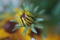 b741c-wildflowerlacebouquet050
